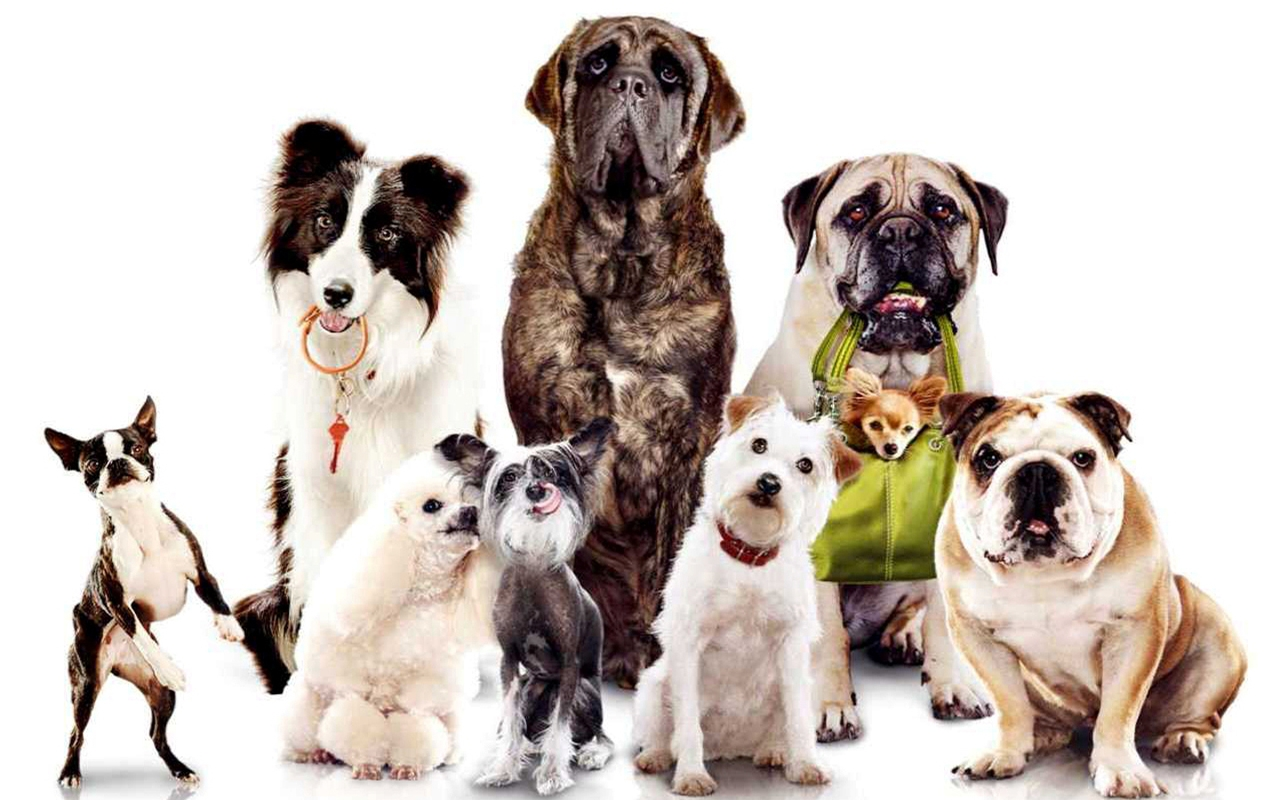 honden_familie