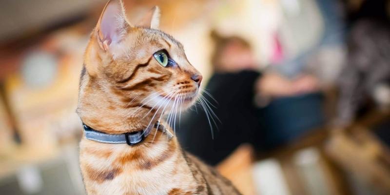 kattenopvang dierenpension tussenwijck